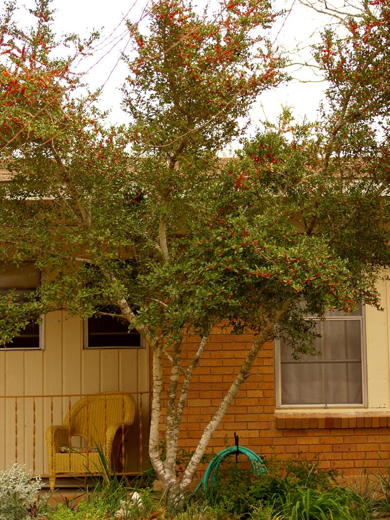Blog | Central Texas Gardener