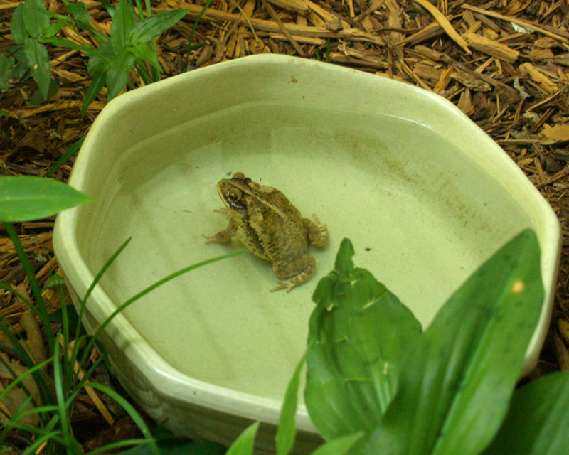 Toad getting cooled off
