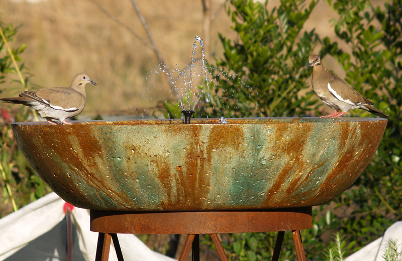 White wing doves on birdbath
