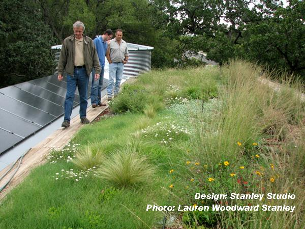 Lauren Woodward Stanely green roof Austin Texas