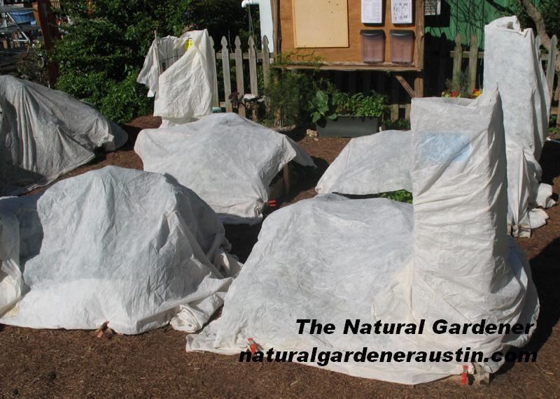 Natural Gardener square foot gardens covered with rowcover