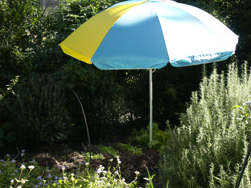 Beach umbrella to shade lettuce seedlings