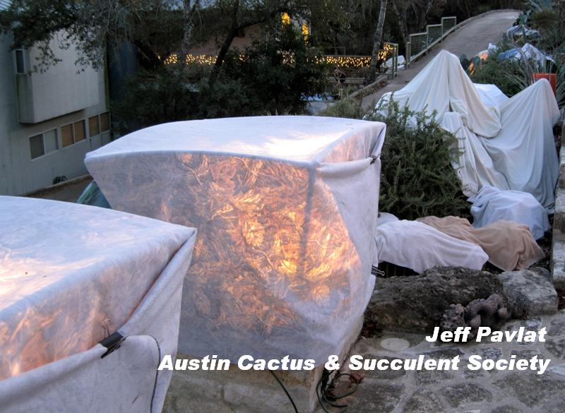 Jeff Pavlat freeze protection ideas for agaves