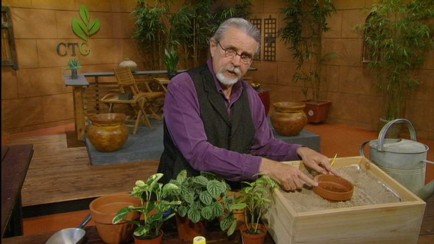 John Dromgoole propagates plants for propagation box
