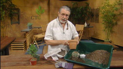 John Dromgoole succulent potting soils