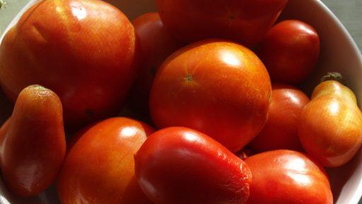 Tomatoes Central Texas Gardener from Sara Robertson