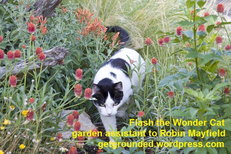 Flash the Wonder Cat, Getting Grounded