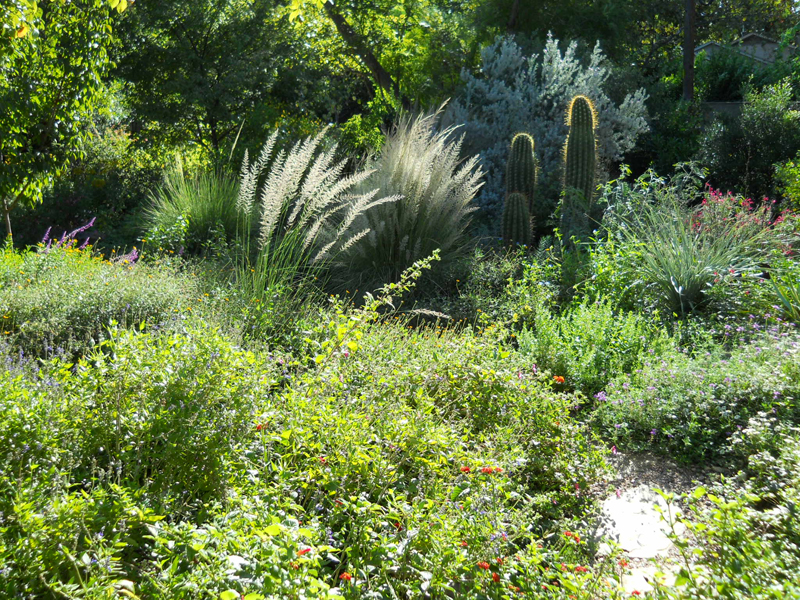 Native Garden Design Austin Texas Central Texas Gardener