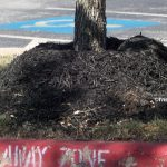 Volcano mulch that kills a tree by Trisha Shirey