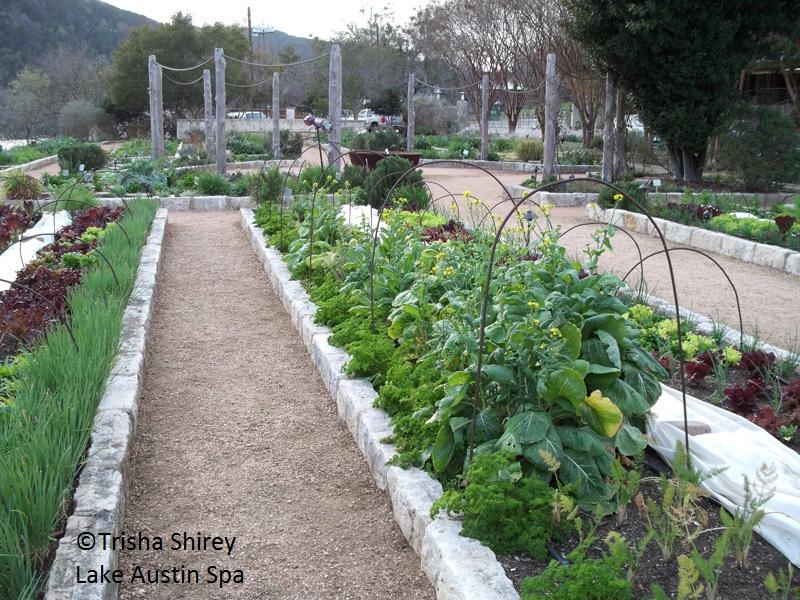Lake Austin Spa Resort vegetable gardens