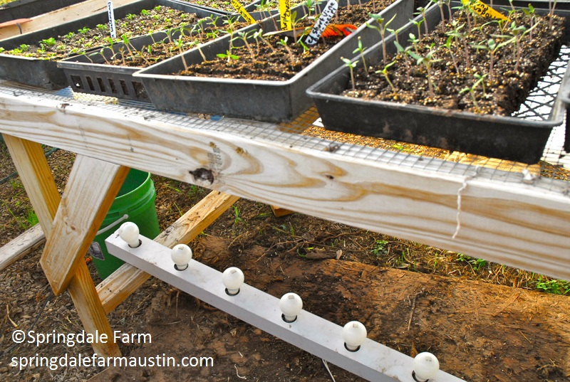 Springdale Farm vanity lights to warm seedlings