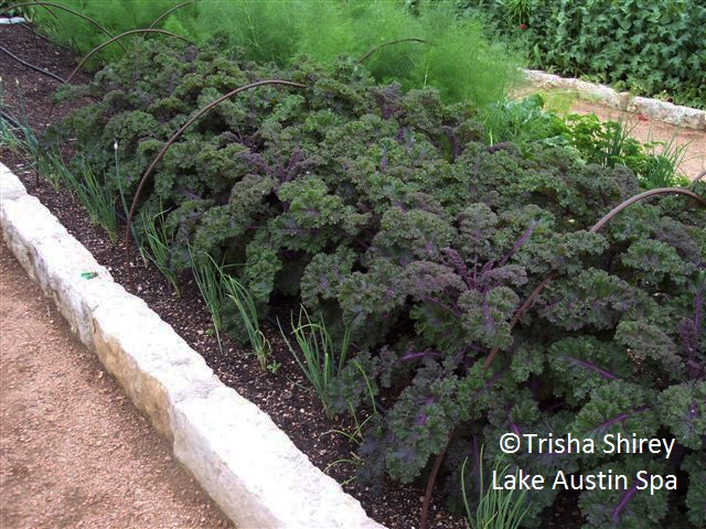 Redbor kale, Trisha Shirey Lake Austin Spa Resort