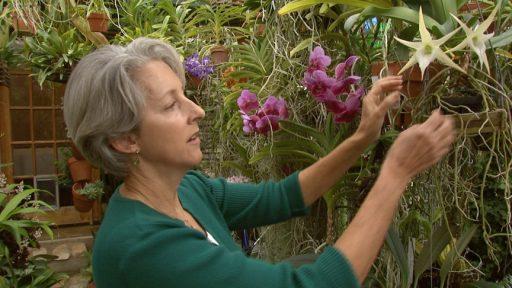 Garden Monica Gaylord
