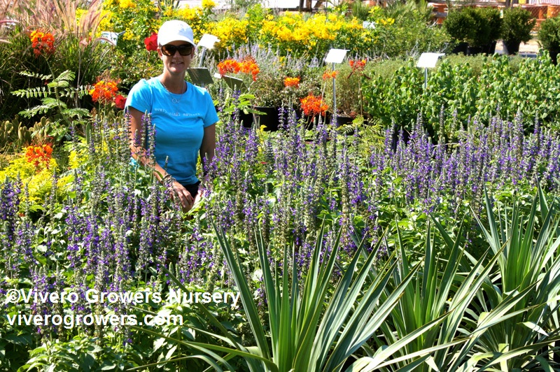 Katherine Cain at Vivero Growers Nursery
