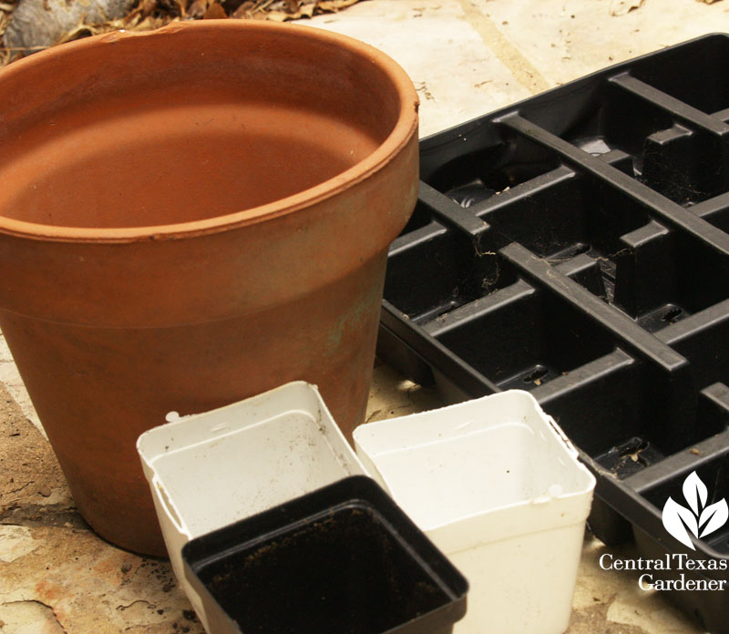 Pots to be cleaned and sterilized before planting again