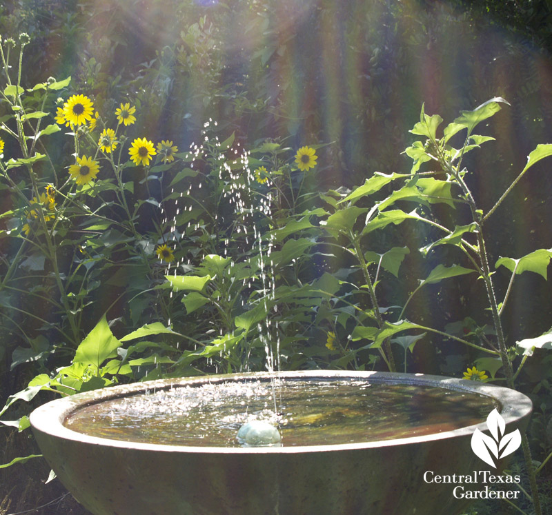 Variance Vessel bird bath with solar fountain