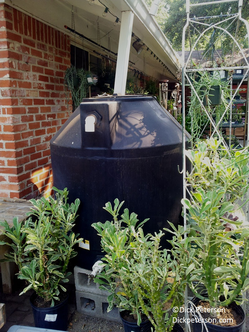 350 gallon rain barrel from Great Outdoors (c) Dick Peterson