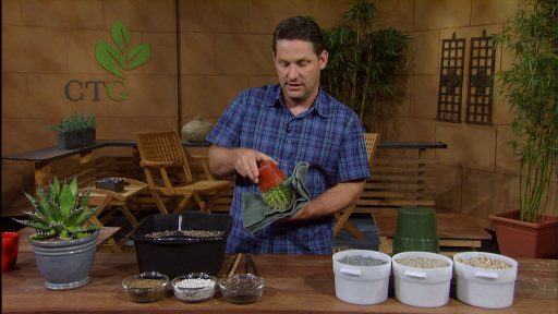 Jeff Pavlat repot cacti and succulents
