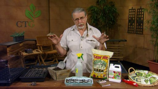 How to start seeds with John Dromgoole