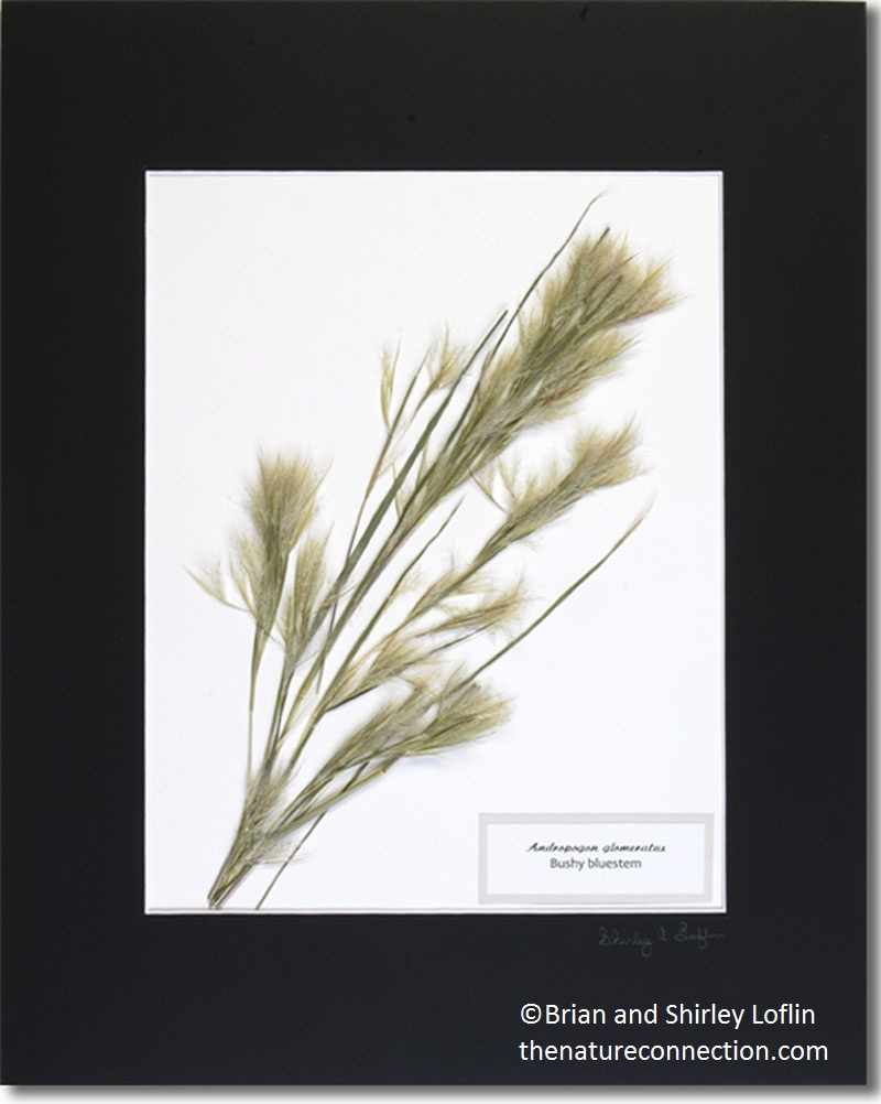 Grasses framed botanical Loflin