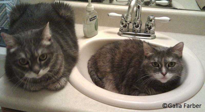 Galia's cats in sink