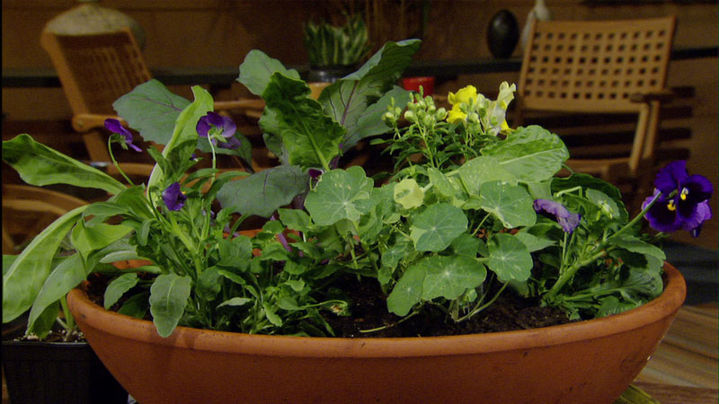 edible container gardens