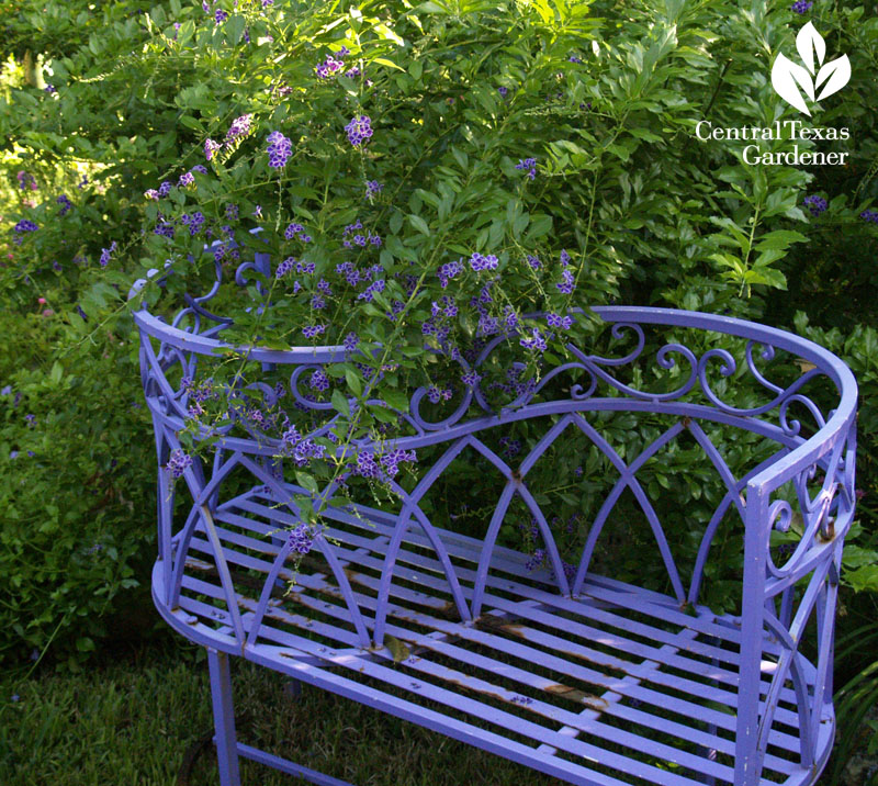 purple bench duranta Lucinda Hutson design
