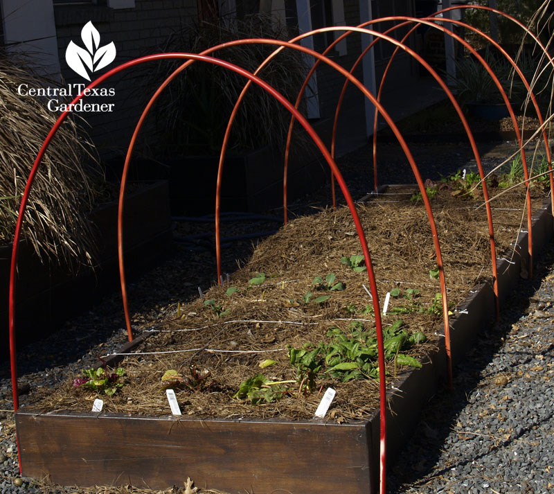 cute PVC hoops vegetable row cover