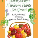 Heirloom Plants Judy Barrett