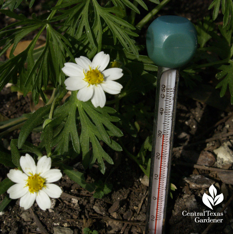soil temperature for planting