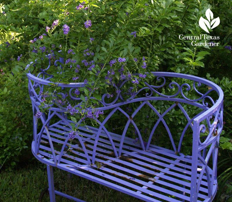purple bench in Lucinda Hutson's garden