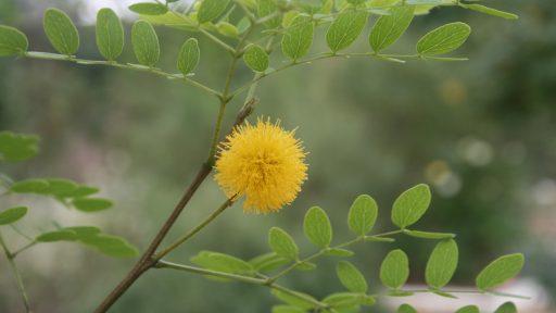 POW Goldenball Lead Tree