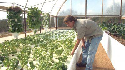 Garden Rob Nash Austin Aquaponics