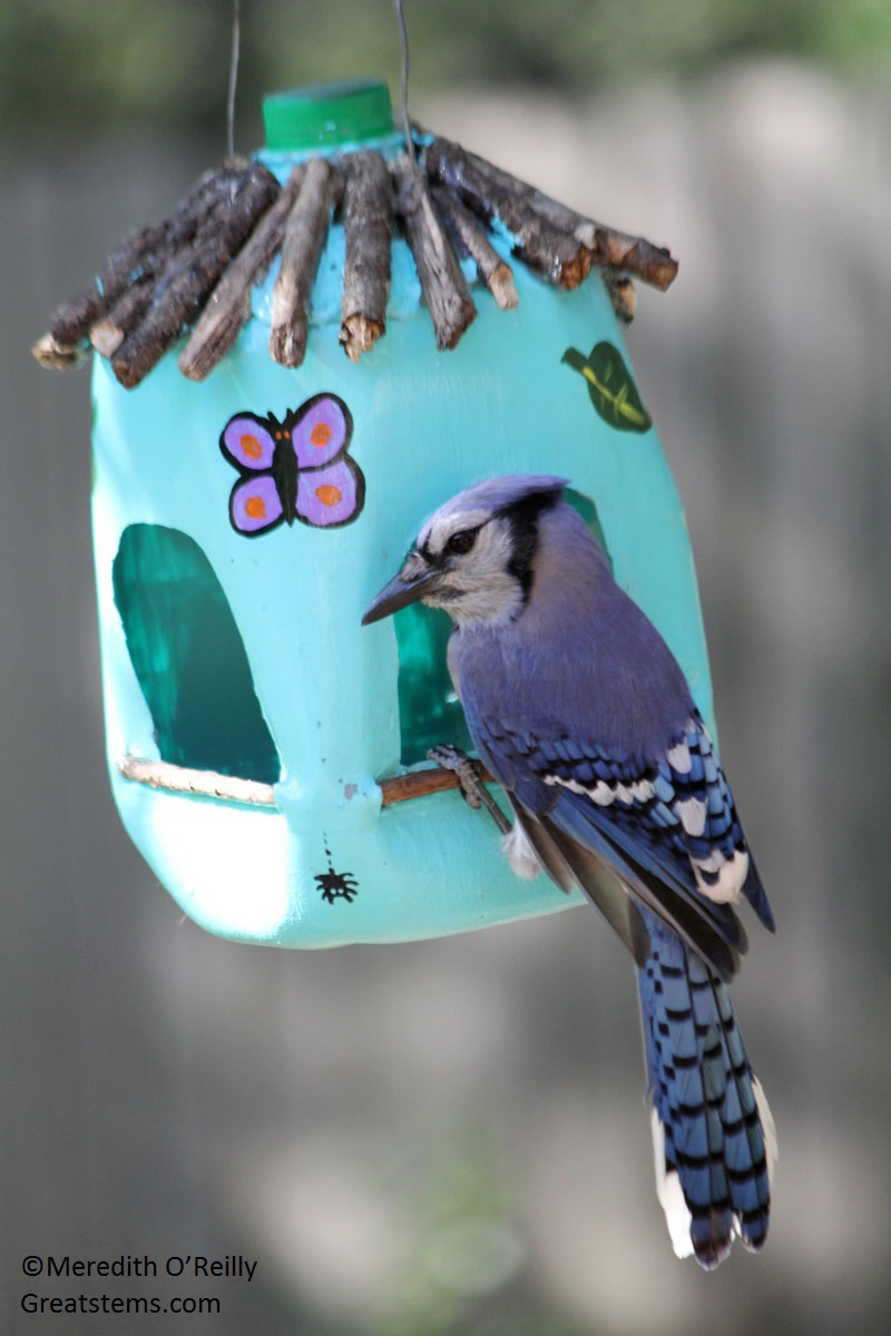 Milk jug bird feeder Meredith O'Reilly Great Stems