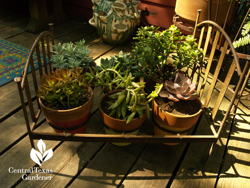 Succulents in cute miniature bed frame