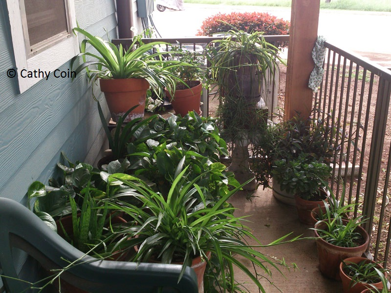 balcony garden fertilized with compost tea Central Texas Gardener