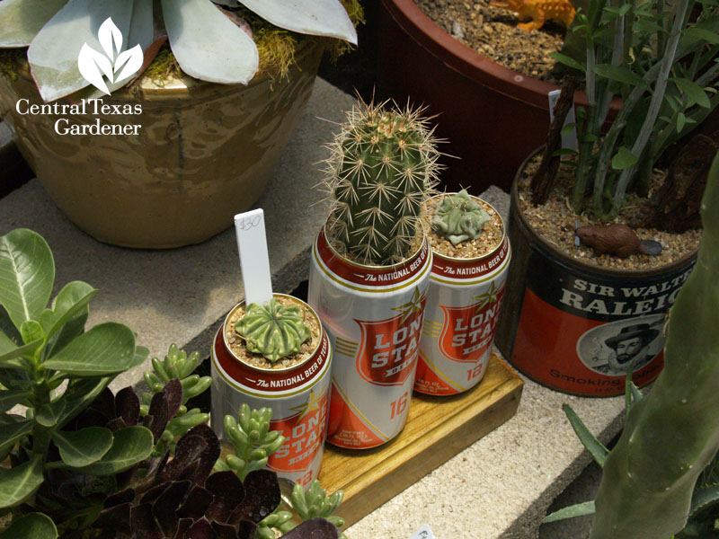 Succulents in old toy truck Eric Pedley East Austin Succulents Central Texas Gardener