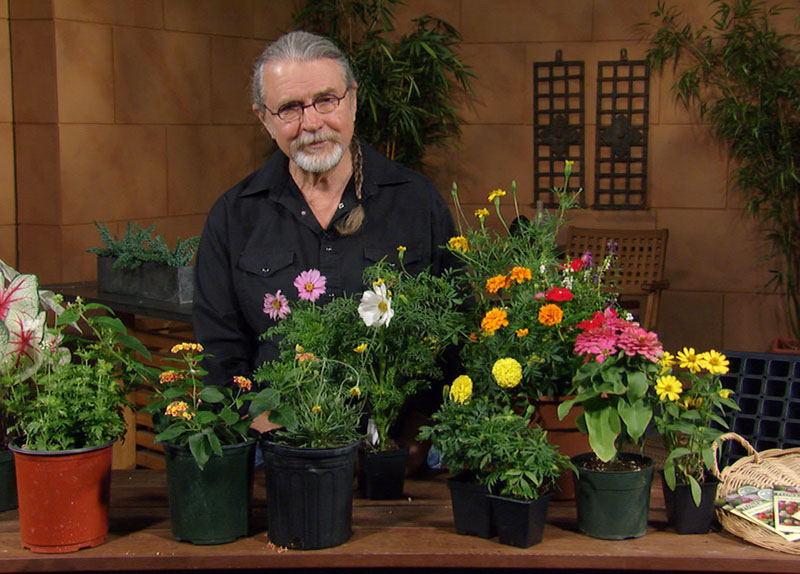 John Dromgoole plants summer flowers from seed