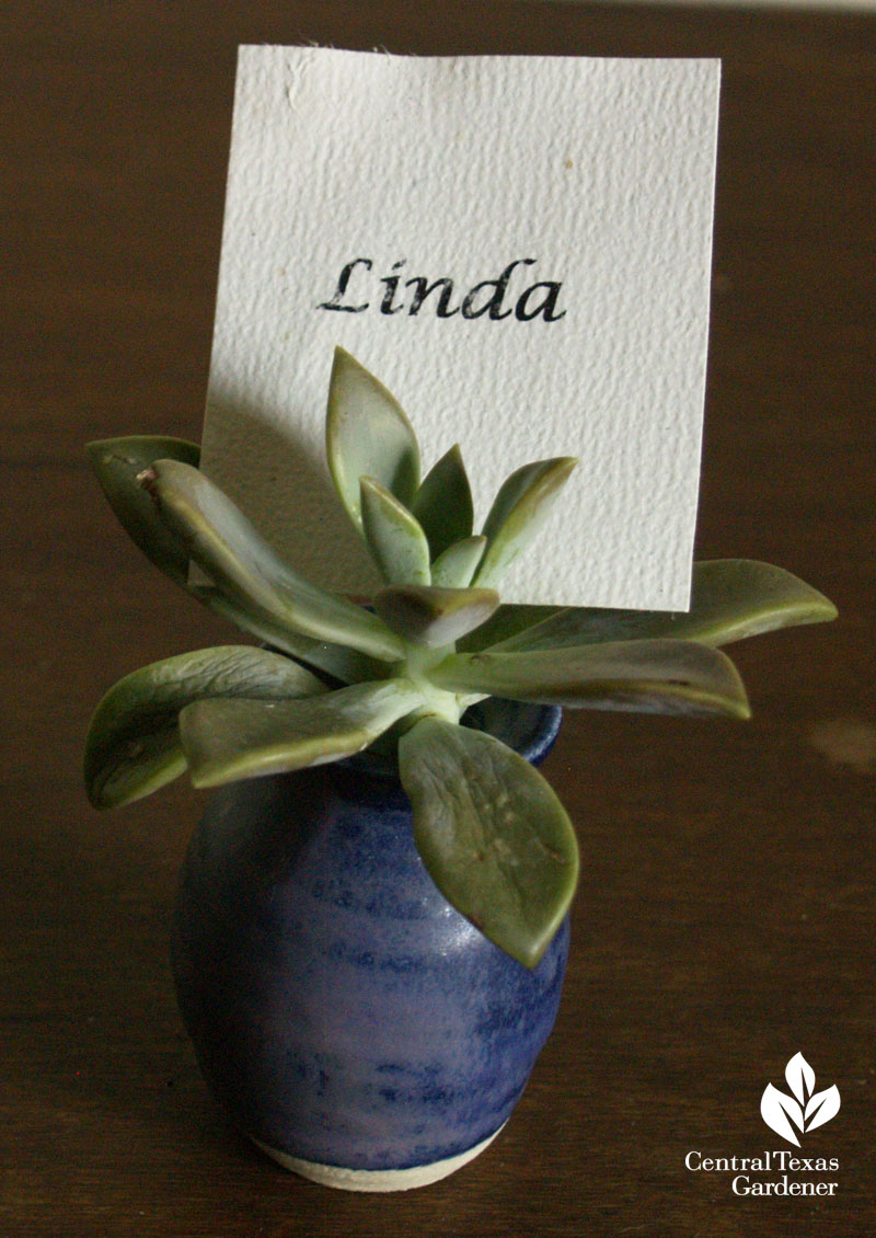 Succulent table place card holder Trisha Shirey Central Texas Gardener