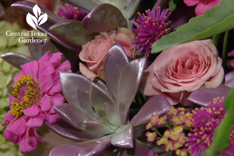 Succulent flower arrangements Trisha Shirey Central Texas Gardener