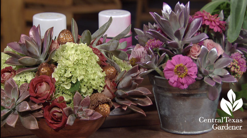 succulent arrangements Trisha Shirey Central Texas Gardener