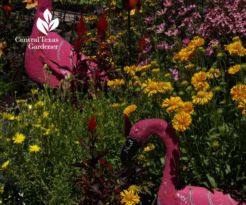 Annie's Annuals flamingos
