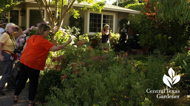 Rebecca Sweet's garden Garden in the Gossip blog