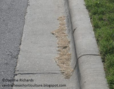 grass clippings street by Daphne Richards