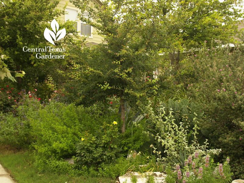 Habitat garden Kyle Texas