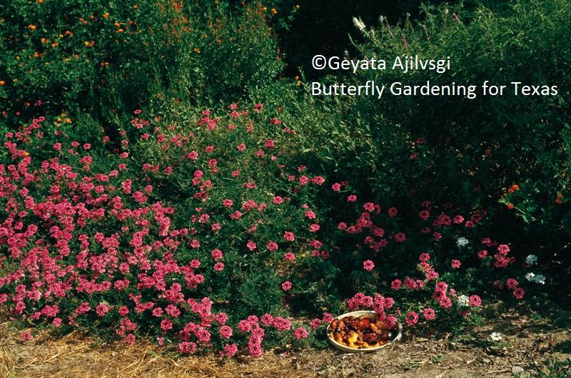 copyright Geyata Ajilvsgi Butterfly Gardening for Texas