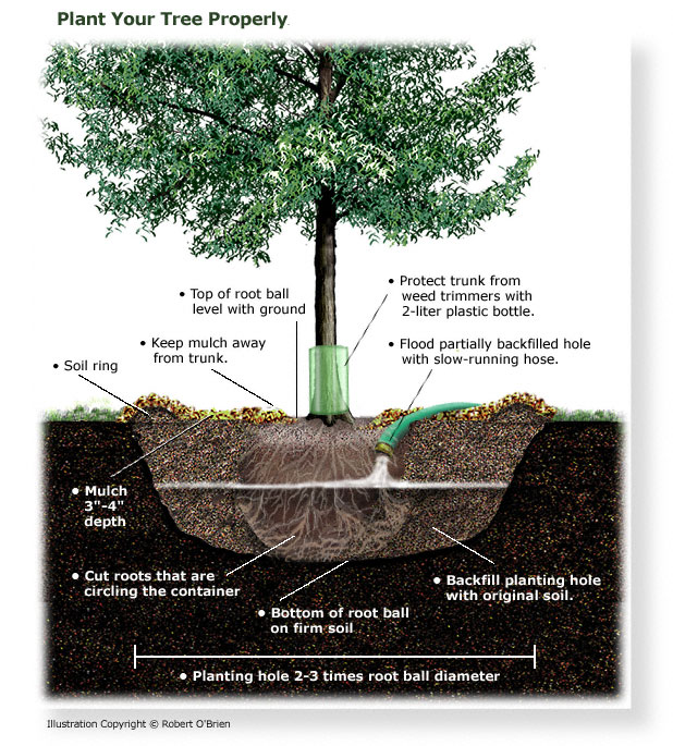 how to plant a tree TreeFolks Austin Texas