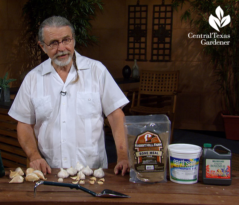 Planting garlic with John Dromgoole The Natural Gardener