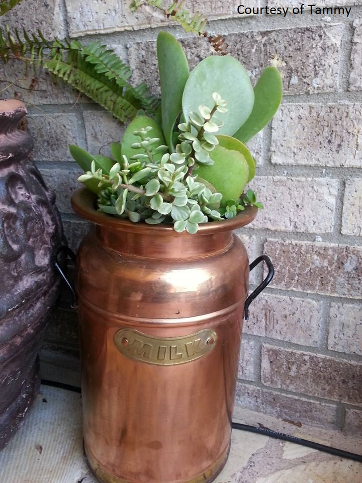 Milk can succulent container photo by Tammy