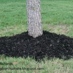 why not to volcano mulch Daphne Richards Travis County Extension